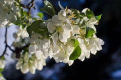 Spring bud flower Royalty Free Stock Photos