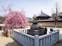 Spring in buddhist temple Royalty Free Stock Image