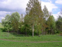 Spring budding on trees. The green meadow is overgrown with grass, a narrow dirt path passes by. The young aspen in the center of the field stands evenly Stock Photos