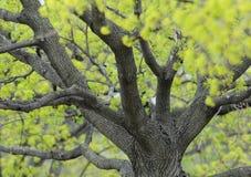Spring buds around tree trunk Stock Image