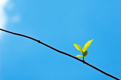Free Spring Buds Leaf On Blue Sky (new Life Concepts) Royalty Free Stock Image - 45939256