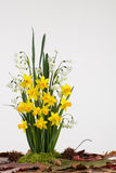 Spring bulb flowers Royalty Free Stock Photo