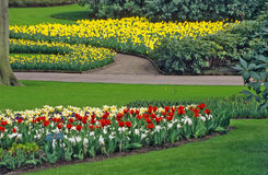 Spring Bulb Garden. Tulips and Daffodils boom in Keukenhof Gardens in the springtime in the Netherlands Royalty Free Stock Images