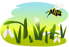 Spring. Bumblebee and snowdrops vector illustration Royalty Free Stock Images