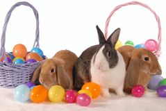 Spring Bunnies with Eggs. Three bunnies with Easter Baskets full of Eggs Stock Images