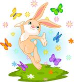 Spring bunny. Cute little bunny jumping on the spring meadow Stock Image