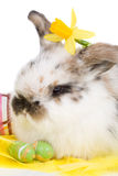 Spring bunny Royalty Free Stock Photos