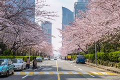 Spring in Busan South Korea Royalty Free Stock Photography