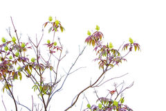 Spring bush with lime green flowers Stock Image