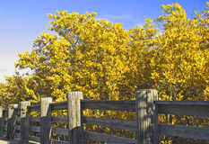 Spring Bushes. Bushes by a fence against blue sky stock image