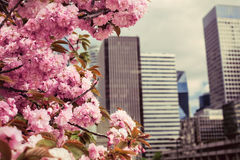 Spring in the business center Royalty Free Stock Photography