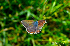 Spring butterfly Stock Images