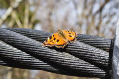 Spring butterfly. The first March butterfly on the cable of bridge Stock Images