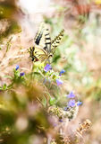 Spring butterfly - monarch Royalty Free Stock Images