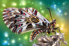 Spring butterfly on an old flower Royalty Free Stock Photo