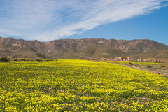 Spring in the Cabo de Gata Royalty Free Stock Photo