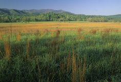 Spring, Cades Cove Stock Photos