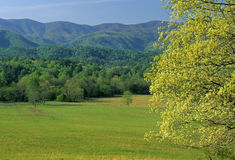 Spring, Cades Cove. Spring Landscape, Cades Cove, Great Smoky Mtns NP, TN stock photos