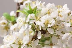 Spring came Royalty Free Stock Photos