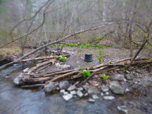 Spring Camp 2. Camping in spring on the Drakes River royalty free stock photography