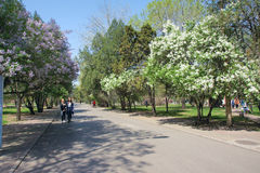 Spring campus Royalty Free Stock Photography