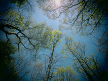 Spring Canopy Royalty Free Stock Photography