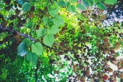 Spring canopy Stock Photo