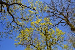 Spring canopy Stock Images