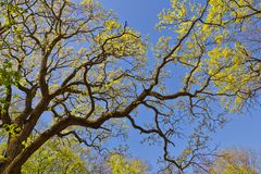 Spring canopy Royalty Free Stock Images