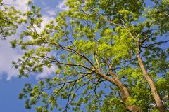 Spring canopy Stock Photos