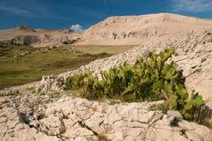 Spring canyon stock photo