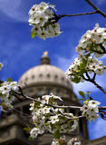 Spring at Capital Building Stock Photos
