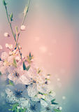 Spring card background royalty free stock image