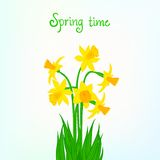 Spring card background with daffodil Stock Image