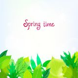 Spring card background with green leaves Stock Photo
