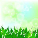 Spring card background with lily of the valley Stock Photo