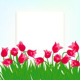 Spring card background with red tulips. Spring card background with field of red tulip flowers. Vector illustration for mothers day postcard, Easter or seasonal Royalty Free Stock Photo