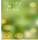 Spring card with camomiles. On green background Royalty Free Stock Photo