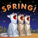 Spring  card with cats Royalty Free Stock Photo