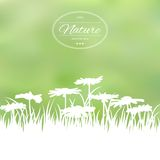 Spring card with flowers Royalty Free Stock Photos