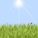 Spring card with grass and flowers Royalty Free Stock Images