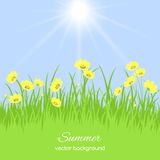 Spring card with grass and flowers Royalty Free Stock Image
