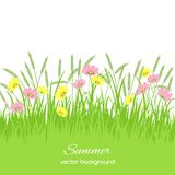 Spring card with grass, flowers Royalty Free Stock Photo