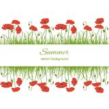 Spring card with grass and poppies Stock Image
