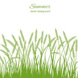 Spring card with grass and spikelets Stock Image
