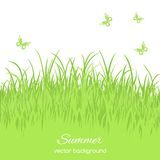 Spring card with grass Stock Photography