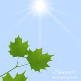 Spring card with maple leaves stock illustration