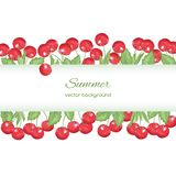 Spring card with red cherry Royalty Free Stock Images