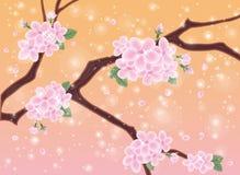 Spring card with sakura flowers Royalty Free Stock Image
