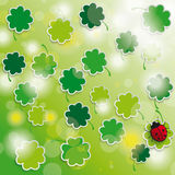 Spring card shamrock sunlights Royalty Free Stock Photos
